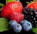 Technologická linka na spracovanie lesných plodov
